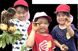 野菜の収穫をする園児たち